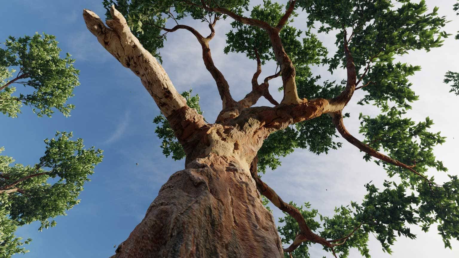 Eucaliptus-02-1536x864_Lumion10-1